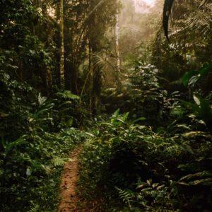 things to do in puerto maldonado, puerto maldonado, things to do, amazon jungle, peruvian amazon