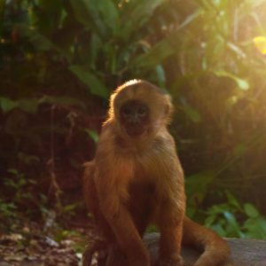 monkey island, monkeys, amazon jungle, peru jungle, tambopata