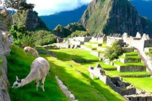 Machu Picchu tours, machu picchu packages, peru full adventure machu picchu, alpaca, cusco, peru, expeditions, condor, huayna picchu hike, travel, alpaca, llama