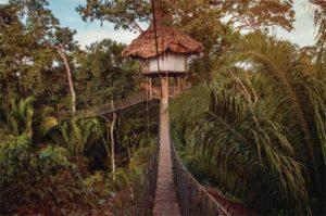Ceiba top, iquitos, puerto maldonado, amazon jungle, amazon river, amazonas, peru, cusco, machu picchu