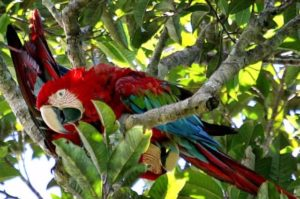 Amazon river cruises, amazon jungle, amazon animals, amazonas, adventure tours, adventure packages, peruvian amazon, peruvian gastronomy, aria amazon river cruise, zafiro cruise