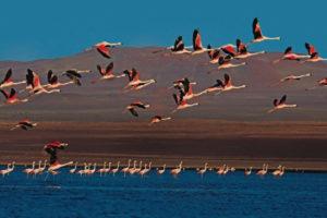 Paracas tour, Lima, Peru Cusco, Machu Picchu, Ballestas Islands