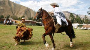 Peruvian Paso Horse